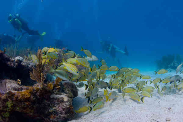 The Florida Keys is known for its vibrant reefs which are great for scuba diving and snorkeling.