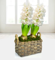 Hyacinth Duo Basket