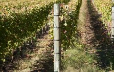 Steenberg saves water to make wine #WaterWatch