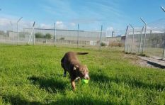 Cape animal welfare group disheartened by string of shelter burglaries