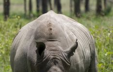 Court ruling lifts ban on rhino horn trade