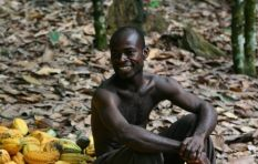 Watch these cocoa farmers' delight as they taste chocolate for the first time