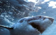 Surfer tells of his encounter with great white shark