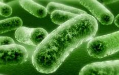 NICD: Listeriosis cases rapidly rising in SA, death toll at 172