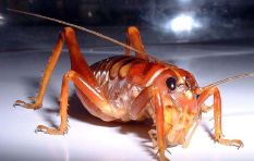 Pest problem? These guys will get rid of it fast (no need to leave your home)