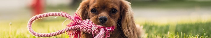 Show Your Pet You Love Them While Showing Others You Care with PetSmart's Buy a Bag Give a Meal Program