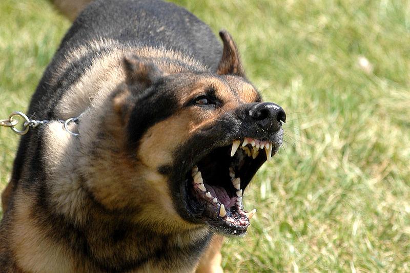 Upland Dog Bites Attorneys