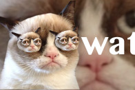 Grumpy Cat Kitten Hd Cats Wallpaper HD