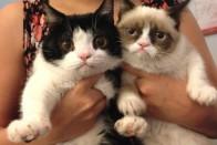 O GRUMPY CATS BROTHER POKEY