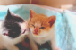 Cute Cats Tumblr Images Pictures   Becuo
