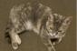 Found Tortoiseshellcalico Cat West Philly Local