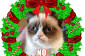 Dump A Day Angry Cat Hates Christmas   10 Pics