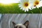 Grumpy Cat  Part 2  Funny Grumpy Cat Memes