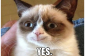Breaking News  Grumpy Cat Wants To Be Happy The Catington Post