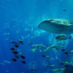 whale-shark-cebu-bohol-adventure-5
