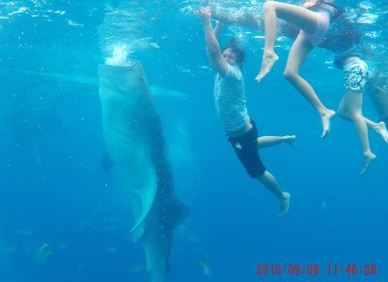 whale-shark-cebu-bohol-adventure-9