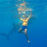 whale-shark-cebu-bohol-adventure-10