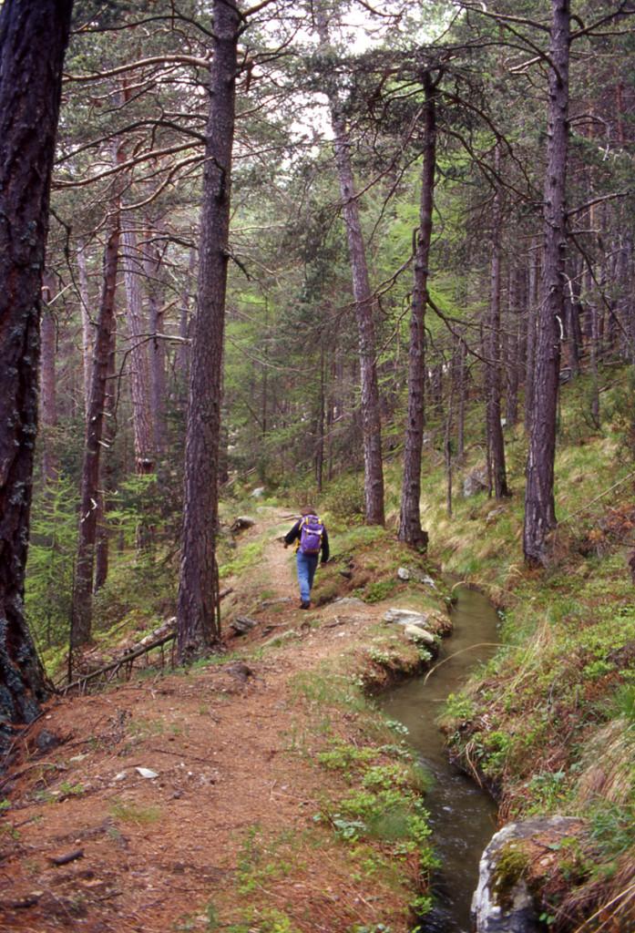 5. Un tratto naturale di ru valdostano: il Ru Chevrère et Montjovet nei pressi di Hérin (Champdepraz).
