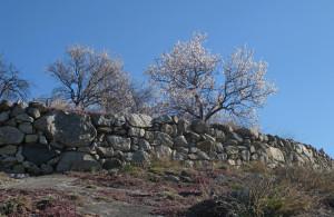 13.Terrazzamenti in granito da massi erratici, poggianti su marmo affiorante. Truc Sant'Elena, Saint-Pierre.