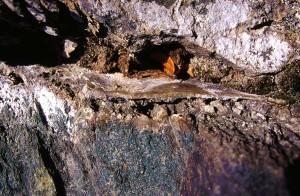 Metabasalto del Combin: minerali ricristallizzati nella faglia