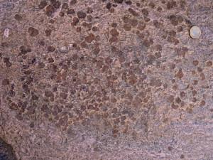 12. Grenats sur bande claire (méta-aplite) des granites permiens