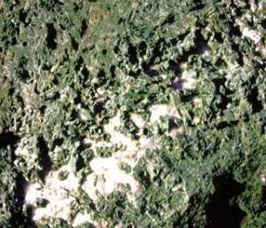 Onfacite (pirosseno sodico di altissima pressione) cristallizzata su quarzo