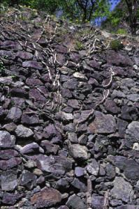 Un muro a secco del giardino ricco in eclogiti violacee