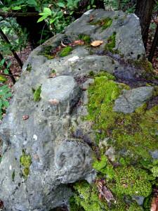 12. Sbozzatura di pietra ollare pronta per essere cavata nel bosco di Estaod (Montjovet).