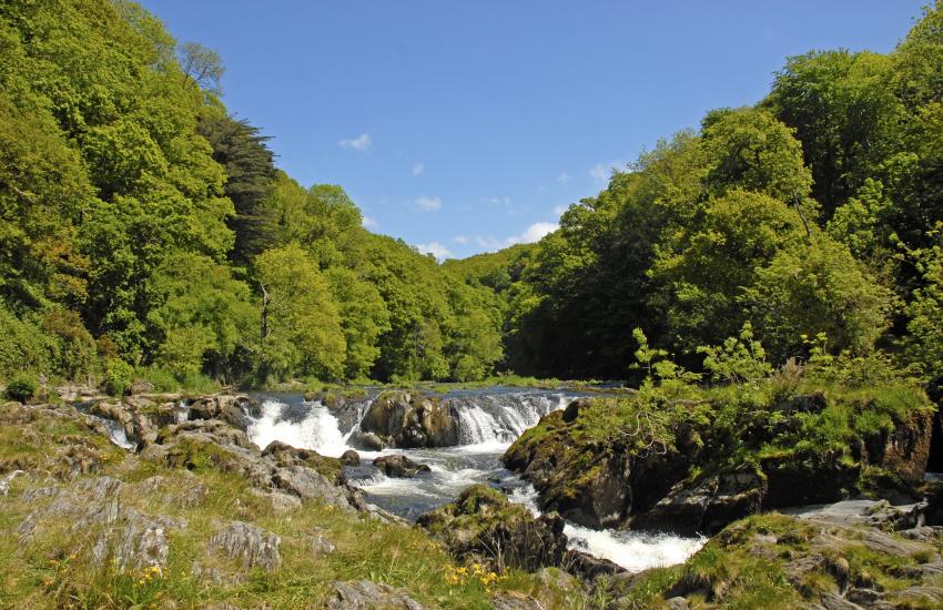 Cenarth waterfalls for salmon leap