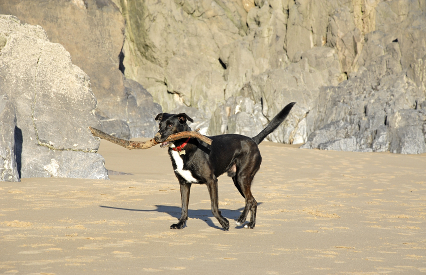Many of our cottages welcome your dogs