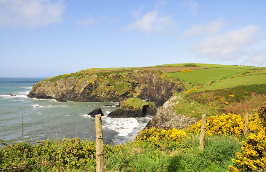 Pembrokeshire's Coastal Path is strewn with wild flowers