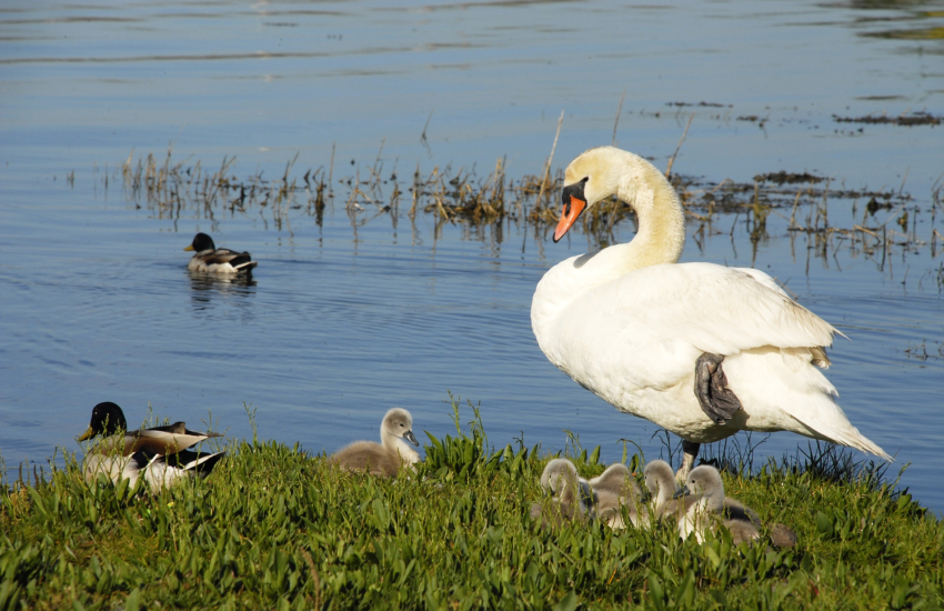 Wildfowl and Wetlands Trust National Centre in Llanelli