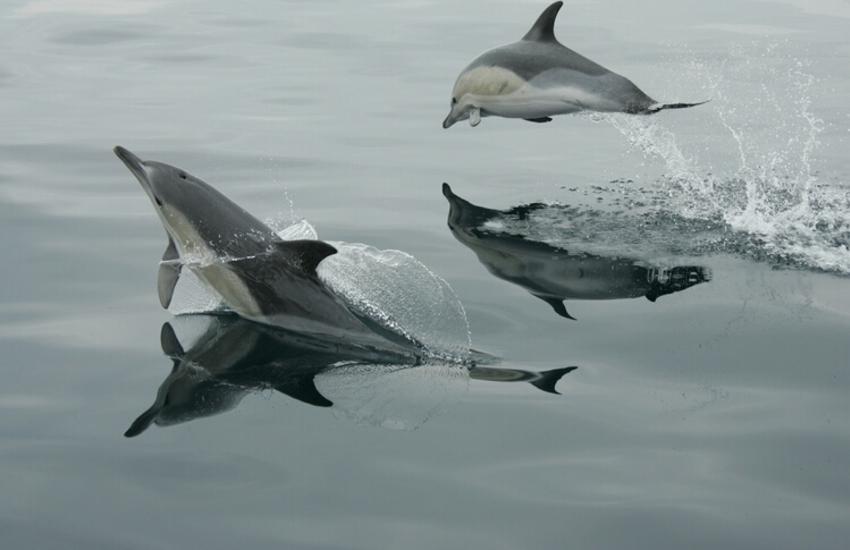 Resident bottlenose dolphins, seals, seabirds on Cardigan Bay