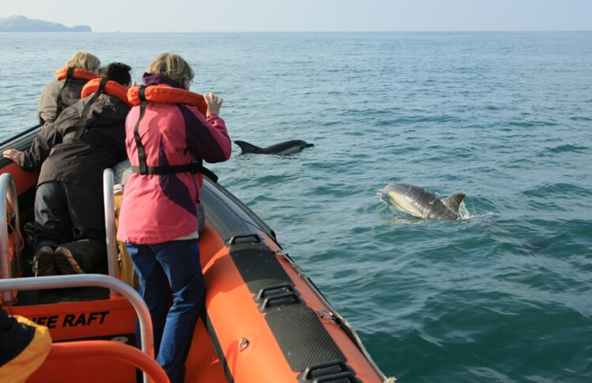Bottle-nosed Dolphins live in the waters off Cardigan Bay