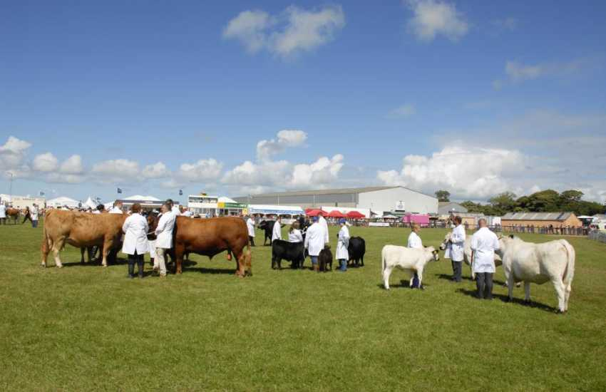 Local agricultural shows are a great day out for all members of the family