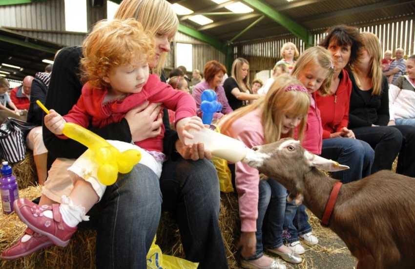 Every one will love a family day out at Folly Farm Adventure Park and Zoo