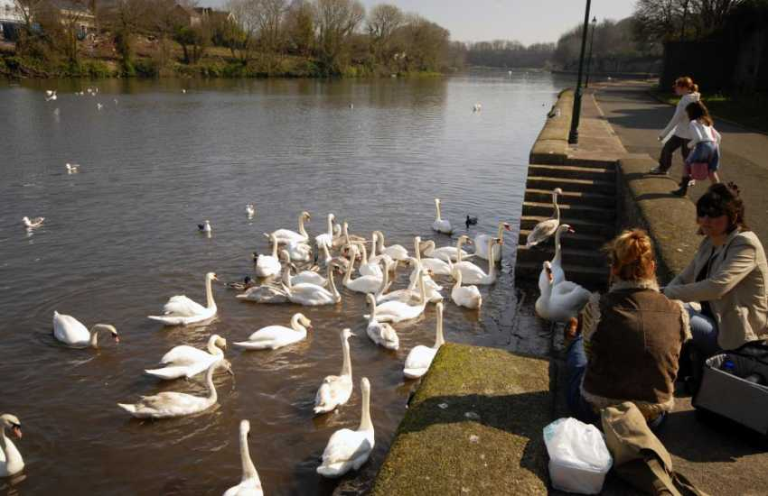 Pembroke Mill Pond and surrounding woodland teeming with wildlife - swans, bats and even otters, is a lovely place to stroll