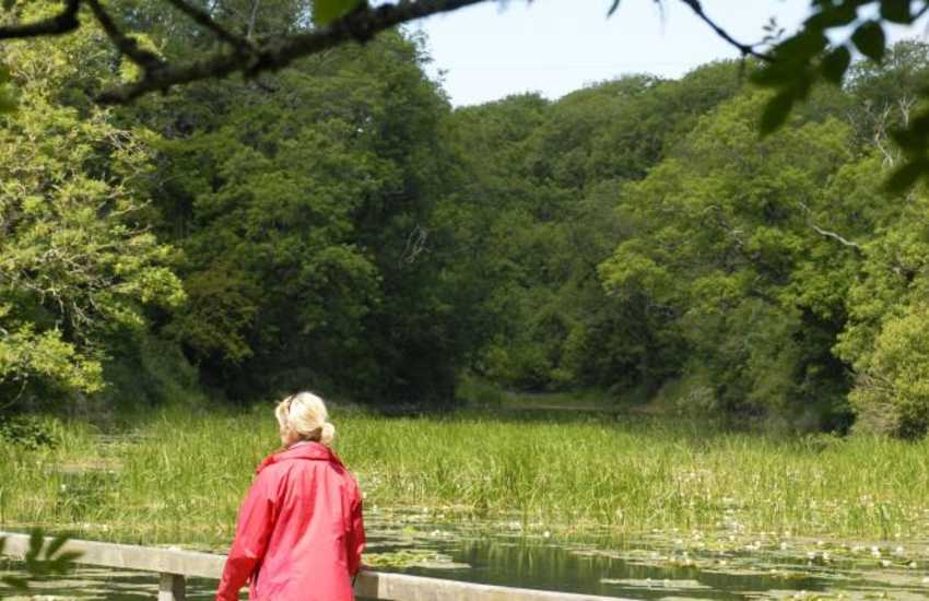 Bosherston Lily Ponds (National Nature Reserve) are the perfect place for peaceful afternoon stroll