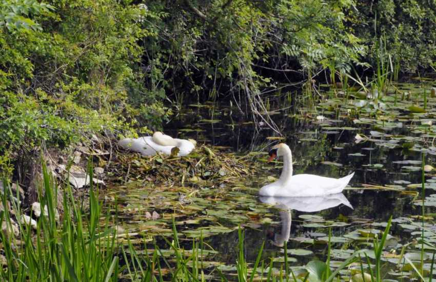 Bosherston Lily Ponds, cared for by the National Trust, are home to a variety of wildlife. Look out for dragon flies, herons, swans and maybe even an otter if you are lucky!