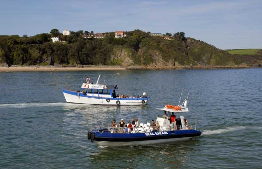 Seal Safari's from Tenby harbour take you on a trip round the off shore islands - lots of wildlife and sea birds to be spotted