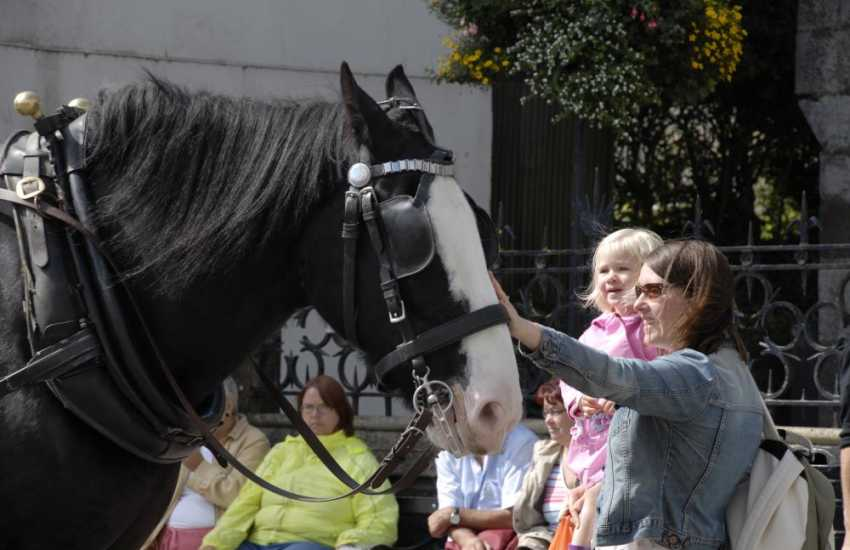 'Major Tom' - do seek him out and enjoy a carriage ride through the cobbled streets of Tenby