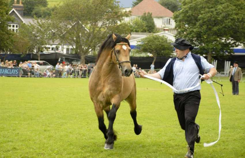 The Aberaeron Festival of Welsh Ponies and Cobs is held in the Square field mid August each year