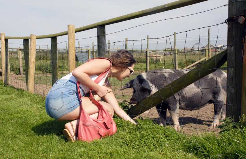 All the family will enjoy a visit to nearby Cardigan Island Park Farm - pigs, goats, ponies, 'Dylwen' the donkey and an excellent play area