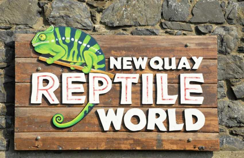 Children will love a visit to New Quay Reptile World - water dragons, lizards and snakes!