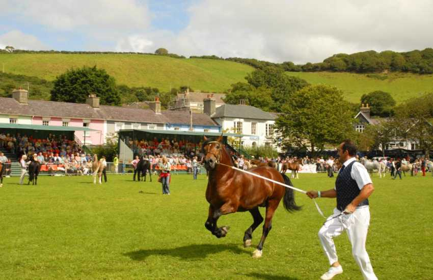 Aberaeron's 'Festival of Welsh Ponies & Cobs' is an exciting annual event held every other year