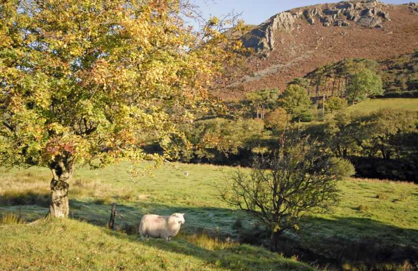 The stunning scenery high in the Cambrian Mountains. Perfect for exploring with your family & faithful four legged friends