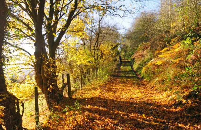 Explore the beautiful lanes and woodland walks around Dolgellau anytime of year.