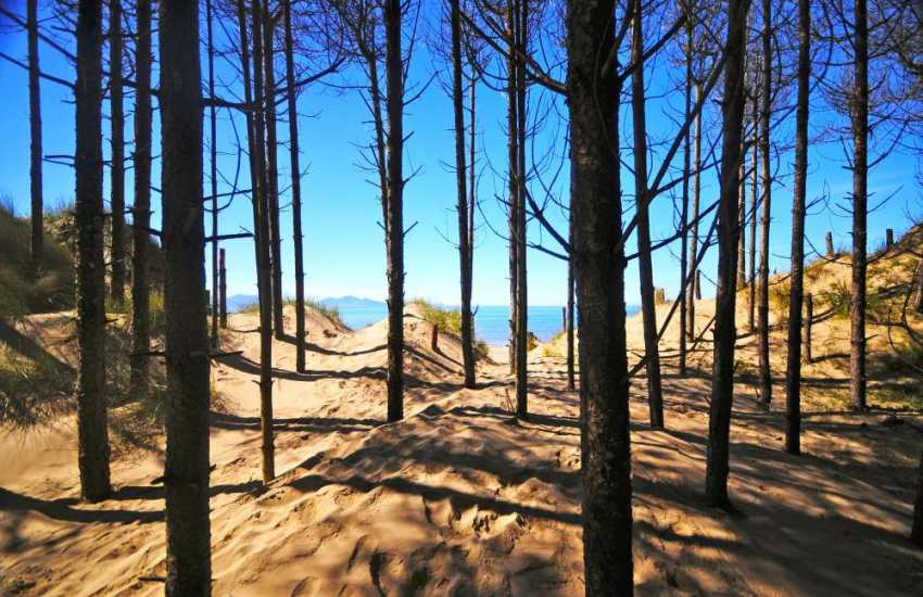 Newborough forest lines the beach at Newborough Warren