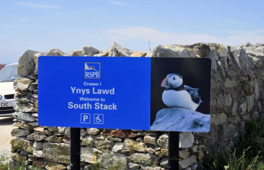 Bird watchers at South Stack get fabulous sightings of Guillemots, Razorbill's and Puffins raising their young