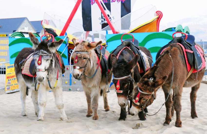Barmouth Beach donkey rides